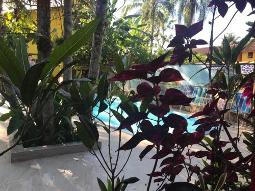 The swimming pool at or close to Casa e Chalé Paraty
