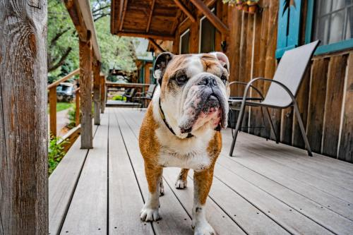 Pet or pets staying with guests at Colorado Bear Creek Cabins