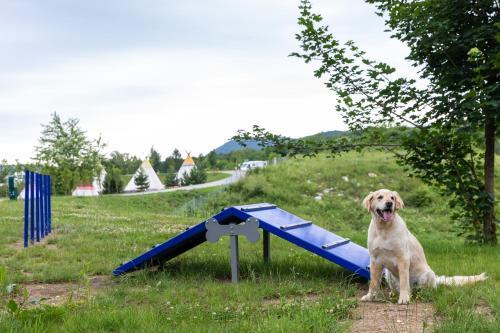 Haustiere von Gästen der Unterkunft Plitvice Holiday Resort