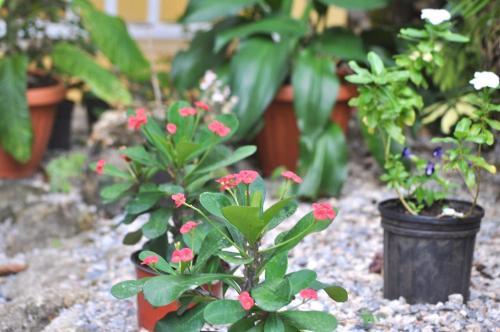 Ein Garten an der Unterkunft De luz Hotel