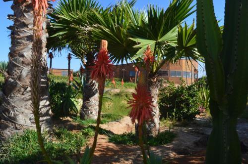 Jardin de l'établissement Dakhla Kitesurf World