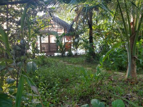 A garden outside CocoVivo