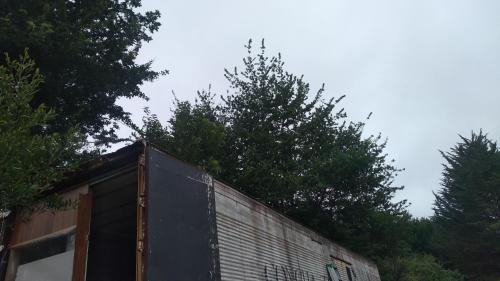 Refugio Araucanía