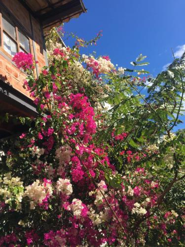 Um jardim em Casas da Paty