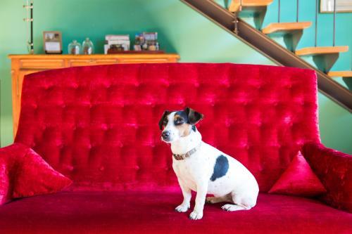 Animal ou animaux domestique(s) séjournant avec des clients dans l'établissement Domaine de Labarthe Maison d'hotes