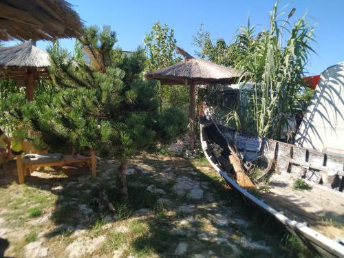 A garden outside Oz 2mai