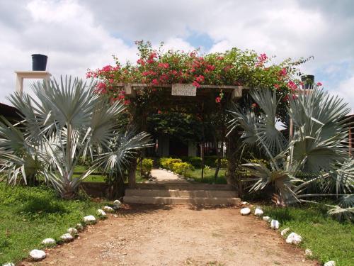 A garden outside Coccoloba Beach Hotel