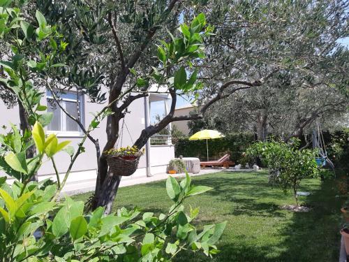 Zahrada ubytování Villa Petra