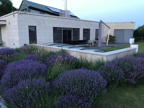 Luxury Villa Emilly - pool, sauna and jacuzzi