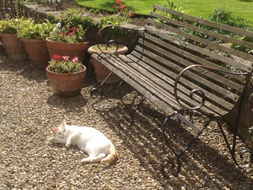 Pet or pets staying with guests at Altonlea Lodge