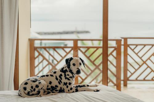 Haustiere von Gästen der Unterkunft The Bannister Hotel & Yacht Club by Mint