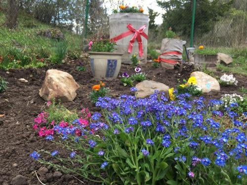 A garden outside Homoród Lodge