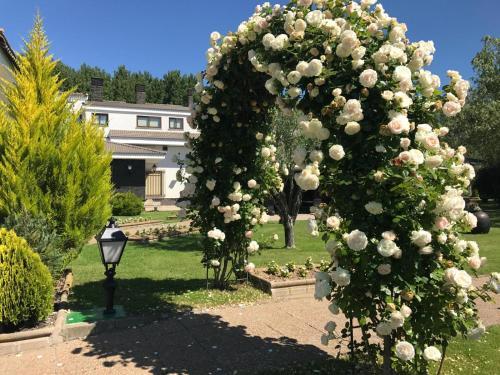Jardín al aire libre en Hotel Conde Rodrigo 2