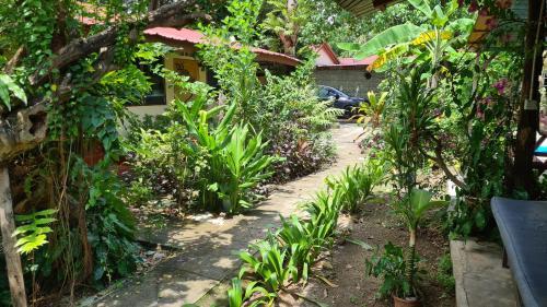 A garden outside Gecko Guesthouse