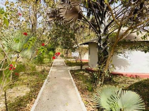A garden outside Dalaba Eco-Lodge