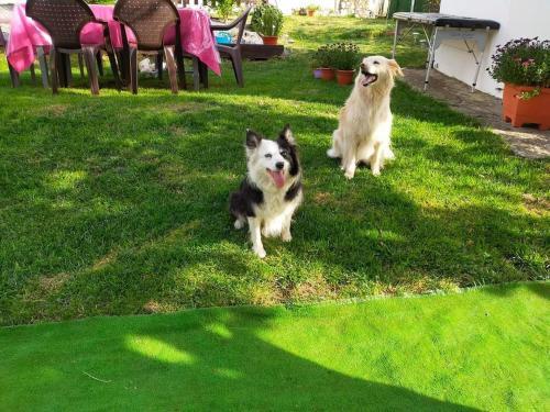 Mascotas con sus dueños en Albergue el Castillo