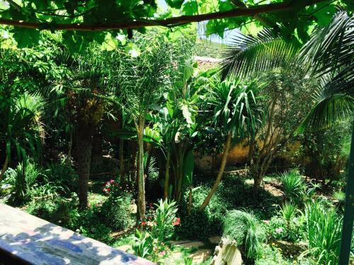 Puutarhaa majoituspaikan Hotel Molino Garden ulkopuolella