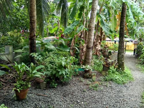 A garden outside Coconut Grove