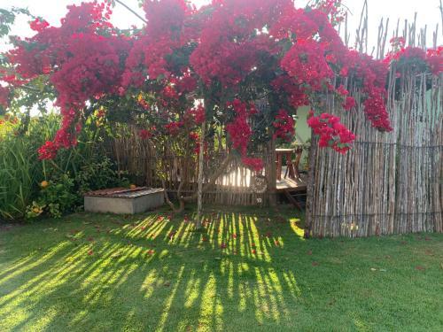 A garden outside Pousada Vila do Coco - Milagres AL