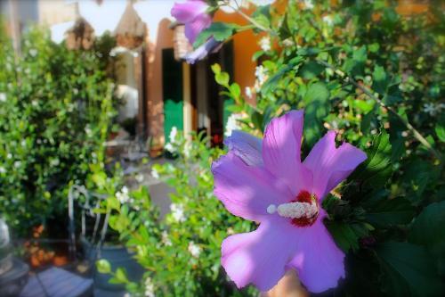 A garden outside Albergo Al Castello