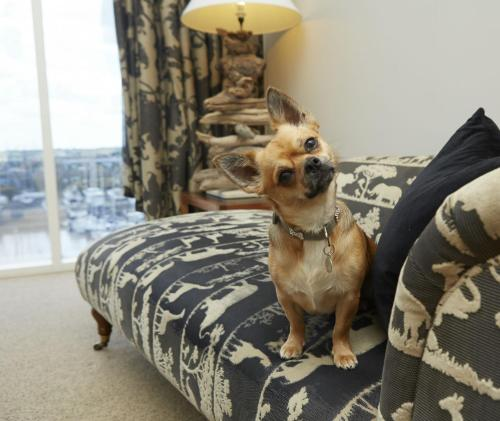 Pet or pets staying with guests at Salthouse Harbour Hotel