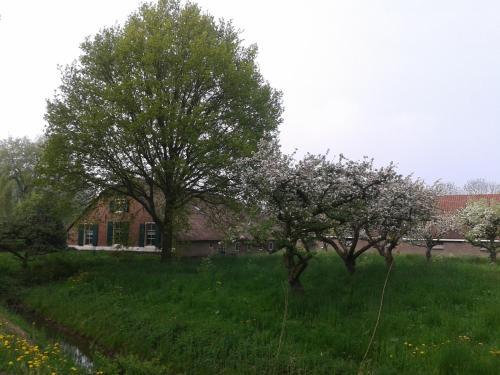 Een tuin van B&B Louisehoeve