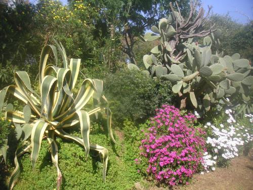A garden outside La ptit'Duch
