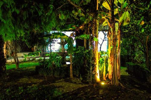 Um jardim no exterior de Casas da Fraga - Serra da Estrela