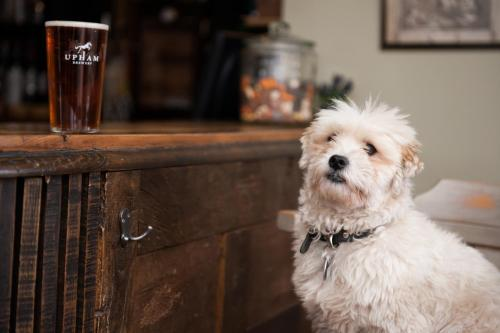 Pet or pets staying with guests at The Peat Spade Inn