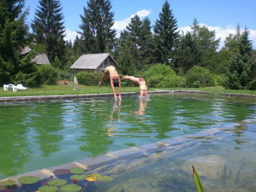 The swimming pool at or near Thomashof