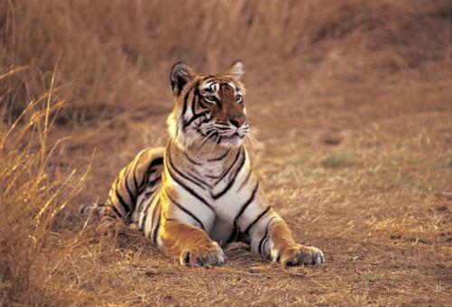 Pet or pets staying with guests at The Oberoi Vanyavilas Wildlife Resort, Ranthambhore