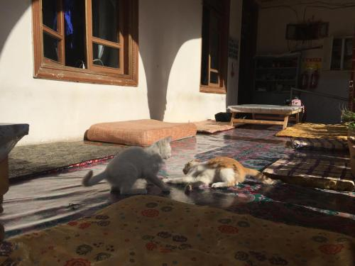 Pet or pets staying with guests at Kashgar Old Town Youth Hostel