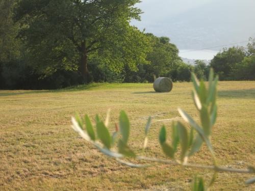 Giardino di Agriturismo Deviscio