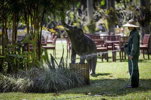 Tiere im Resort oder in der Nähe