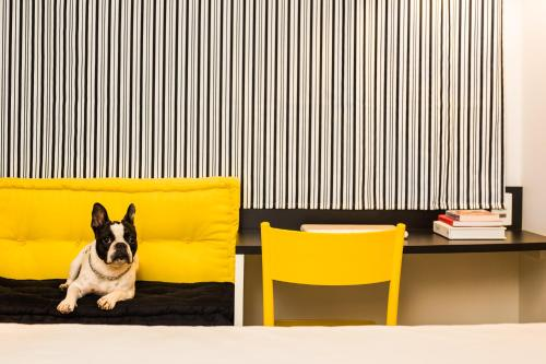 Pet or pets staying with guests at ibis Styles Porto Alegre Centro