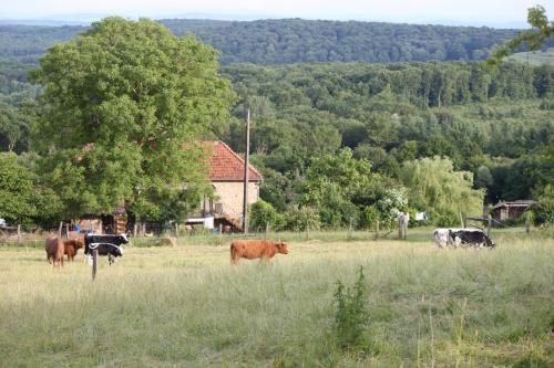 Animaux dans le séjour à la ferme ou à proximité