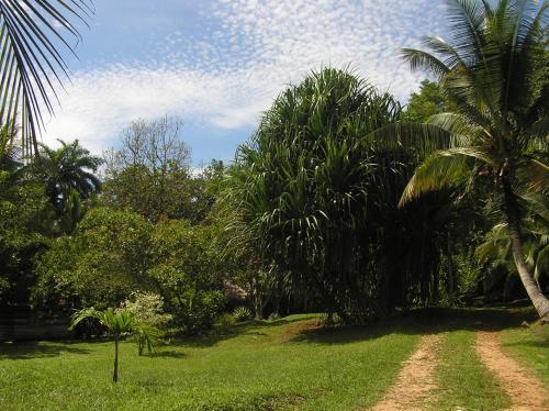 A garden outside Suital Lodge