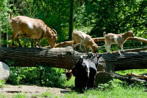 Haustiere von Gästen der Unterkunft VILA VITA Burghotel Dinklage