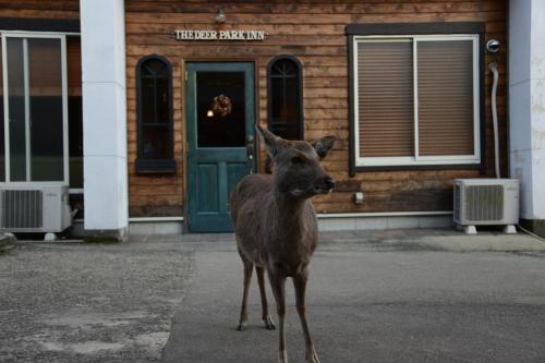 Pet or pets staying with guests at The Deer Park Inn
