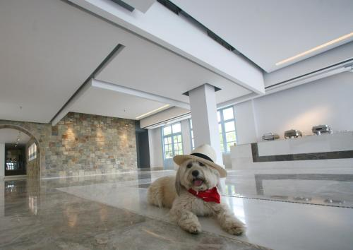Pet or pets staying with guests at Pedi Beach Hotel
