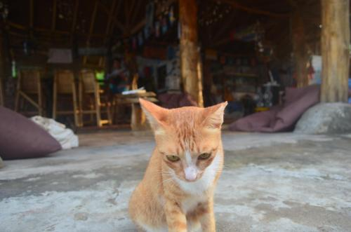 Haustiere von Gästen der Unterkunft Gili Meno Eco Hostel