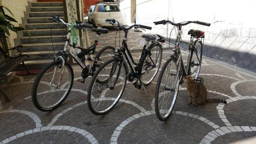 Biking at or in the surroundings of Hotel Fiorentina