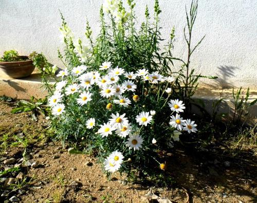 A garden outside Casa Vacanza Atlantide