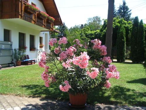 Zahrada ubytování Sommer Panzió