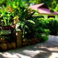 Buisson Guesthouse, hotel in La Digue