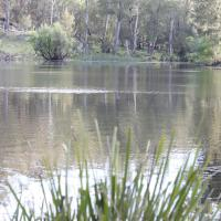 Arcadian Cabin - Southern Highlands River Retreat, hotel in Canyonleigh