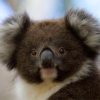 Bimbi Park - Camping Under Koalas, hotel em Cape Otway