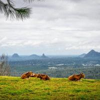 Tranquil Park, hotel in Maleny