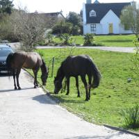 Letterfrack Farmhouse on equestrian farm in Letterfrack