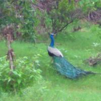 Ranakpur Nature Retreat, hotel in Sādri
